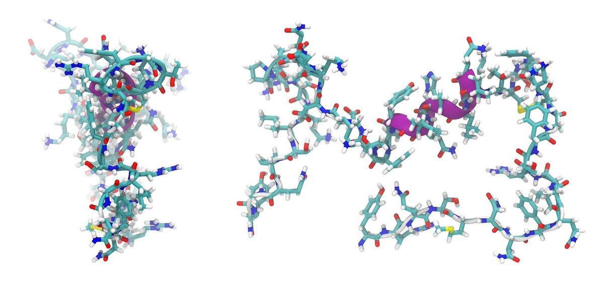 Виды и классификация пептидов