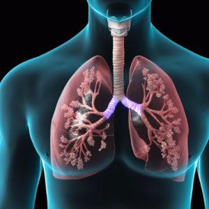 Патологии дыхательной системы